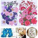 Qiwenr 61 Pcs Natuurlijke Gedroogde Geperste Bloemen,Geperste Bloemen Gemengde Echte Droge Bloem,Voor Hars Kunst Ambachtelijk