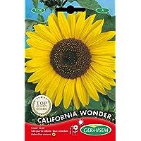 Germisem Graines Soleil géant de Californie CALIFORNIA WONDER