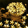 Archies® Decorative Flower Fairy String 16 Led Lights for Diwali Festival, Christmas, Party, Home Décor Gift (Warm White)