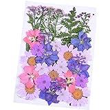 Wohlstand Pressé Fleur Mixtes Bio Naturel Fleurs Séchées DIY Art Floral Décors Collection Cadeau pour Art Scrapbooking Artisa