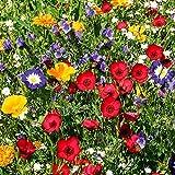 Gärtner Pötschke Blumen-Mischung Original Mössinger Sommer(R) für 6 qm