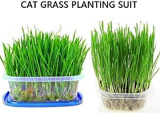 KOBWA Natural Cat Gras Pflanz Kit - Soilless schnell wachsenden Wheatgrass Pflanzen Set mit Box für Haarballen Control