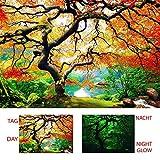 Startoshop Wandbilder, nachtleuchtende Leinwandbild, Fototapete, Acrylglas, Ahorn im Herbst, Baum.