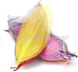 Pinkdose® 50Pcs Natural Magnolia Skeleton Leaf Leaves Card Making Scrapbooking DIY Crafts Mixed Color