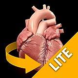 Heart - 3D Atlas of Anatomy - Lite Version