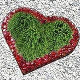 Bellisa Herz 3 kg Glasnuggets 12/20 mm Herz Gitter Grabschmuck Grabgestaltung Blumentopf Pflanzschale Glasnuggets-Farbe: Rubinrot
