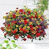 Ncient 200 Semillas de Morning Glory de Jardín Colgante Semillas de Flores Plantas Raras para Balcón Interior y Exteriores