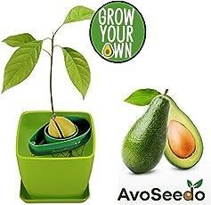 AvoSeedo Besondere Garten Geschenk - Pflanzen Sie Ihren Eigenen Avocadobaum. Kleine Geschenke für Frauen und Männer klein Dekoration