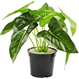 PRIMAISON Artificial Fake Monstera Deliciosa Greenery Potted Plants ,Artificial Plants with Gray Plastic Pot for Indoor Outdo