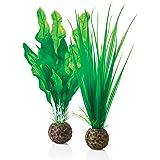biOrb 46055 Set de 2 Plantas Verdes, Un tamaño
