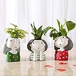 Ferns N Petals Set of 3 Air Purifying Plants in Multicolor Raisin Pots
