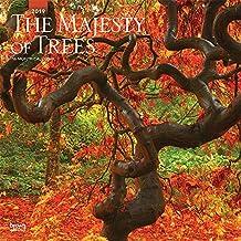 The Majesty of Trees - Majestätische Bäume 2019 - 18-Monatskalender: Original BrownTrout-Kalender [Mehrsprachig] [Kalender]