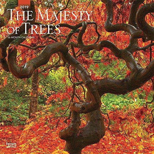 The Majesty of Trees - Majestätische Bäume 2019 - 18-Monatskalender: Original BrownTrout-Kalender Mehrsprachig Kalender
