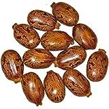 Gigante Ricinus/Rizinus communis 30 semillas - por Samenchilishop