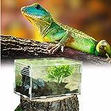 Caja de Alimentación de Insectos, 20X12X12cm Acrílico Transparente Estuche de Cría de Reptiles para Spide, Lagartija, Escorpi