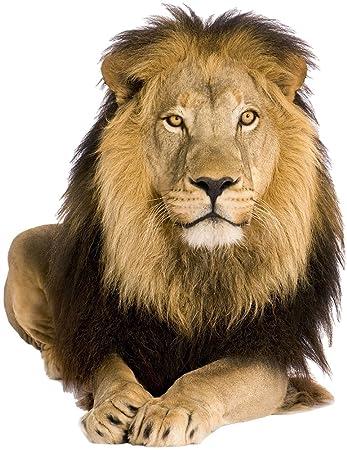 Graz design 641055 57 wandsticker wandtattoo aufkleber tiere löwe ...
