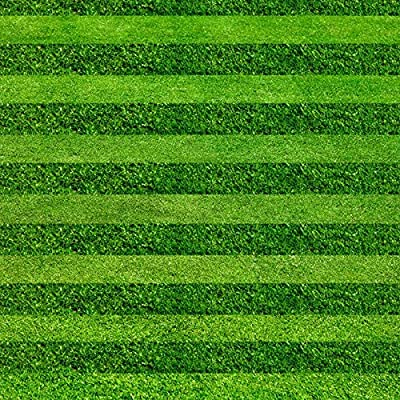 PC semillas de la hierba del césped Campo de fútbol Campos Villa Grado especial Evergreen Lawn seeds1000 Flores de alto grado y semillas