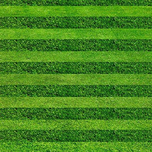 Les fleurs et les graines de haute qualité de gazon Graines Golf Terrains de soccer Villa de qualité spéciale graines Evergreen Lawn