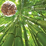 Las semillas de bambú, 1 bolsa de bambú ornamental Semilla natural gigante fresco del jardín de la semilla para el Parque