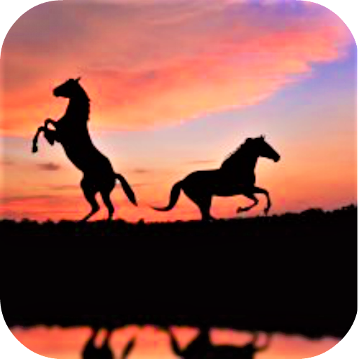 Fond D Ecran De Chevaux Amazon Fr Appstore Pour Android