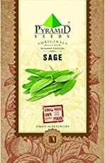 Pyramid Sage Herb Seeds (Green, Pack of 100)
