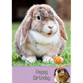 Bunny Rabbit Birthday Card 8x55 Mix Match On Cards