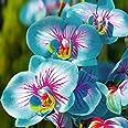 TOYHEART 100 Piezas De Semillas De Flores De Primera Calidad, Semillas De Phalaenopsis, Plantas Aromáticas De Cymbidium, Plán