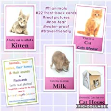 Animals, Their Homes, Their Babies, Their Food, The Sound They Make Flashcards Non-Tear Waterproof