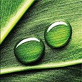 artissimo, Glasbild, 20x20cm, AG1329A, Waterdrop on Grass, Natur, grün, Bild aus Glas, Moderne Wanddekoration aus Glas, Wandbild Wohnzimmer modern
