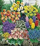 MyRedRose 140 Blumenzwiebeln Spar-Paket, 140 Zwiebeln im Mix mit Tulpen, Narzissen Hyazinthen, Anemonen, Zierlauch und mehr