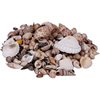 Artszone Mix Size Sea Shell Natural Shankh for Aquariums/Art and Crafts/Table Decoration (Multicolour) - Pack of 500 g