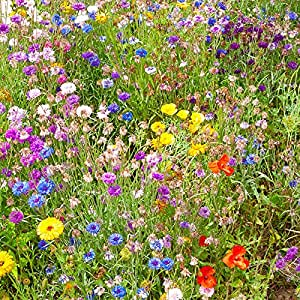 Butterfly And Bee Booster Wildflower Seed Mat 2m X 48cm