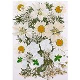 Heyu-Lotus Fleurs Pressées Séchées Naturelles Mélangées, Fleurs Séchées Multiples pour Bricolage Bougie Résine Bijoux Ongles
