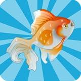 Fische Memory-Spiel