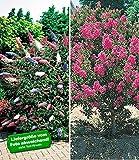 BALDUR-Garten Blüten-Sträucher-Kollektion Sommerflieder und Flieder des Südens, 2 Pflanzen Buddleia Schmetterlingsflieder und Lagerstroemia Kräuselmyrte