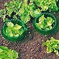 Schneckenschutzring, 6er-Pack von Siena Garden - Du und dein Garten
