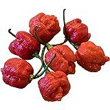 Chili Carolina Reaper - - 10 semillas