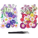 LABOTA 80 STKS Echte gedroogde geperste bloemen, gemengde natuurlijke droge bloemen, madeliefjes bladeren, meerdere natuurlij
