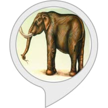 Elephant Facts: Fun Facts About Elephants
