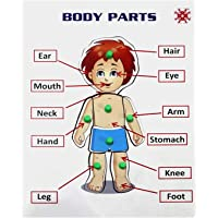 Indian Handicraft Human Parts of Body Wooden Tray with Knobs Learning and Educational Jigsaw Puzzle Toys for Kids…
