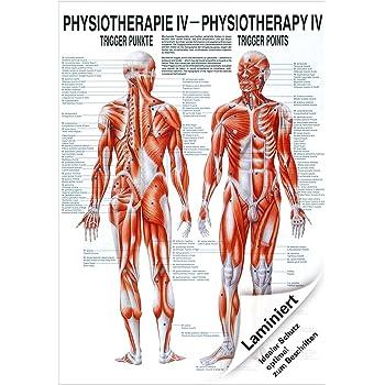 Triggerpunkte Poster Anatomie 70x50 cm medizinische Lehrmittel ...