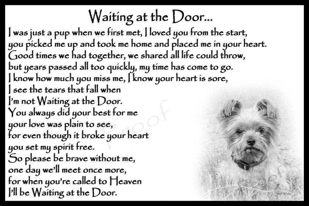 Yorkshire Terrier pet loss memorial sympathy bereavement gift magnetic card – Waiting at the Door