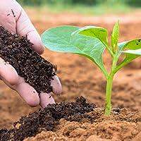 Vedhahi Vermicompost Fertilizer Manure for Plants 10 Kg (2 Pack of 5 Kg)