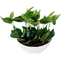 Pindia Miniature Money Plant Green Leaf Artificial Indoor/Outdoor Plant Decorative Plant for Home,Office Garden Décor…