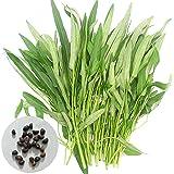 PRODUITS HOO - Graines de fleurs 20pcs / sac Hoya graines kerrii (orchidée Décembre) jardin Fournitures Bonsai Promotion de perte!