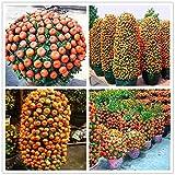 20pcs / bag Orange Samen klettern Orangenbaum Samen Bonsai Bio-Fruchtsamen wie ein Weihnachtsbaum Topf für Pflanze Hausgarten