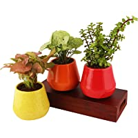 Leafy Tales Ceramic Wishbowl Planter, Multicolor Small Size - 3 pc
