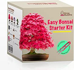 Züchte Dein Eigenes Bonsai   Züchte Einfach 4 Arten Von Bonsai Bäumen Mit  Unserem Kompletten