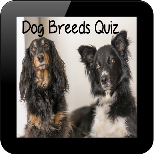 dog-breeds-quiz