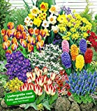 BALDUR-Garten 140 Blumenzwiebeln Spar-Paket, 140 Zwiebeln im Mix mit Tulpen, Narzissen Hyazinthen, Anemonen, Zierlauch und mehr